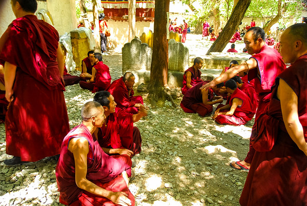 A group of red robed monks in the shade of a tree gesturing as they debate points of religion.